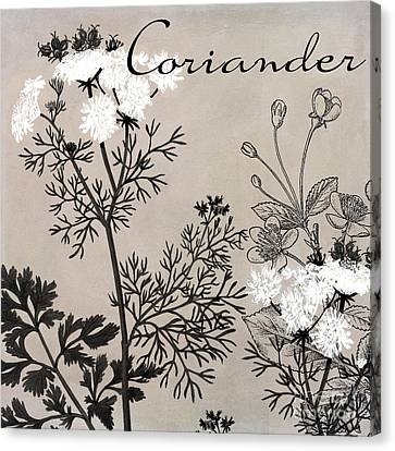 Coriander Flowering Herbs Canvas Print by Mindy Sommers