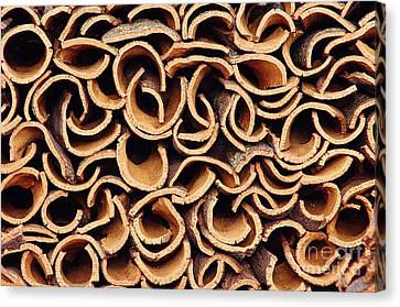 Industrial Background Canvas Print - Cork Pile by Carlos Caetano