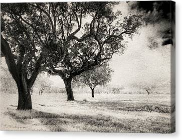 Cork Trees Canvas Print by Celso Bressan