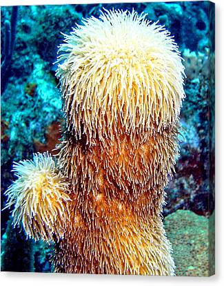 Corky Sea Finger Coral - The Muppet Of The Deep Canvas Print by Amy McDaniel