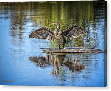 Cormorant Air Dry Canvas Print