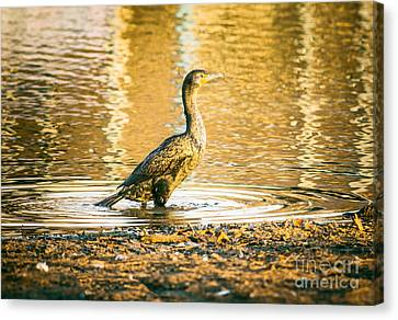 Cormorant At Morning Canvas Print by Robert Frederick
