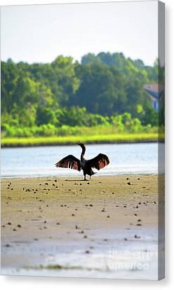 Cormorant At Topsail Beach Canvas Print by Eva Kaufman