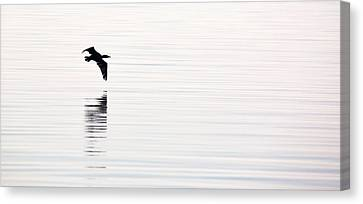 Glassy Wing Canvas Print - Cormorant Flight by Rachel Morrison