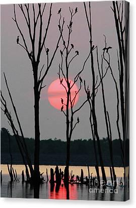 Cormorant Gathering At Sunrise Canvas Print