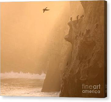 Cormorant Rookery In Dawn Fog Canvas Print by Max Allen