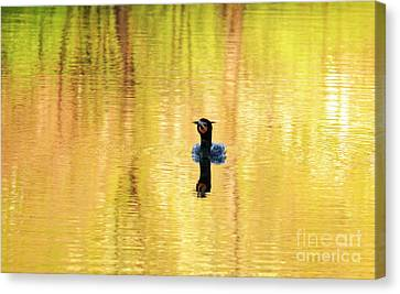 Double Crested Cormorant With Crazy Hair Canvas Print by Charline Xia