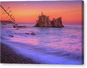 Cormorants Rock Canvas Print