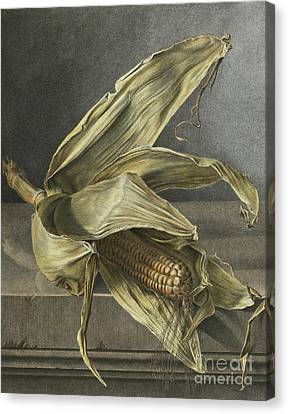 Corn Canvas Print by Gerard van Spaendonck