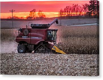 Corn Harvest Time Canvas Print