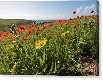 Corn Marigold And Poppies Canvas Print by Terri Waters