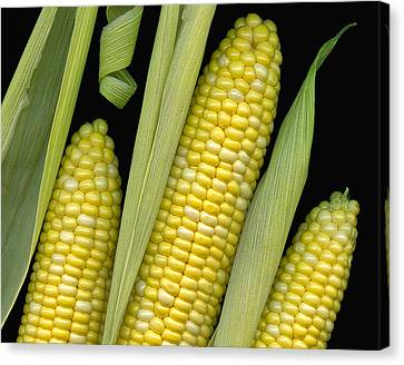 Corn On The Cob I  Canvas Print by Tom Mc Nemar
