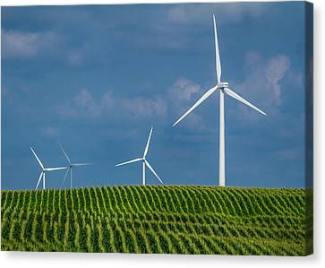 Corn Rows And Windmills Canvas Print