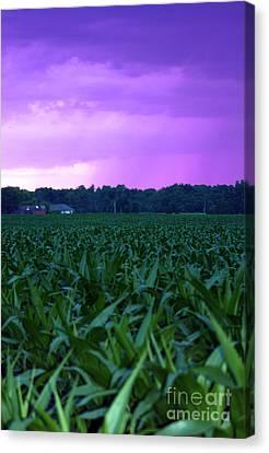 Cornfield Landscapes Purple Rain Canvas Print by Cathy  Beharriell