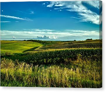 Cornfields Of Iowa Canvas Print by L O C