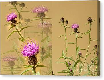 Cornflower Collage Canvas Print by Donald Davis