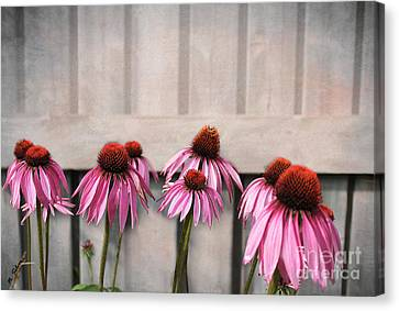 Coneflower Couples Canvas Print by Nina Silver