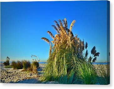 Coronado Beach Sea Oats Canvas Print by See My  Photos