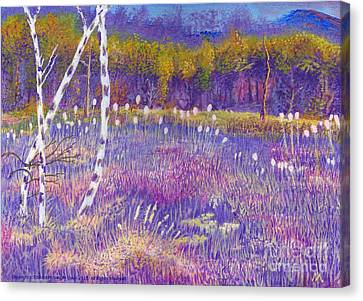 Cors Caron Bulrushes With Purple Grasses Canvas Print