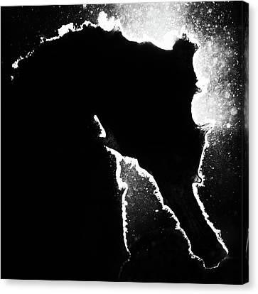 Cortez Seahorse Canvas Print