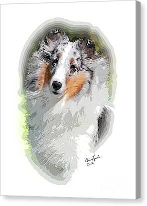 Shetland Sheepdog Canvas Print - Cosme Sterling Silver by Chris Lynch