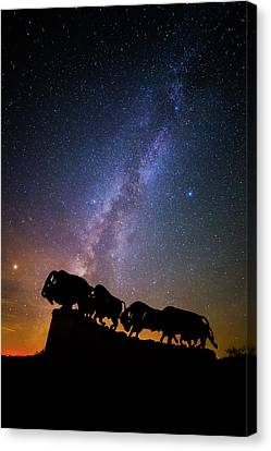Canvas Print featuring the photograph Cosmic Caprock Bison by Stephen Stookey