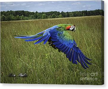 Cosmo In Flight Canvas Print