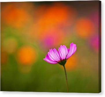 Cosmo Pastels Canvas Print by Mike Reid