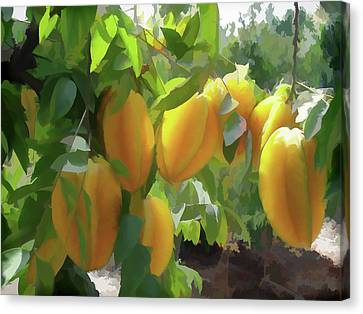 Costa Rica Star Fruit Known As Carambola Canvas Print by Lanjee Chee