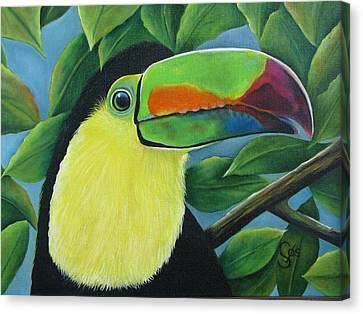 Costa Rican Toucan Canvas Print by Shirley C Checkos