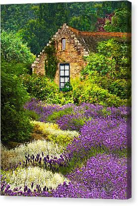 Cottage Amidst The Lavender Canvas Print