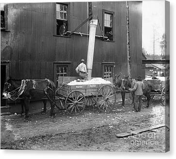 Cotton Ginning, 1902 Canvas Print by Granger