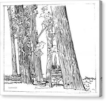 Cotton Woods Creve Coeur Path Canvas Print by John Lautermilch