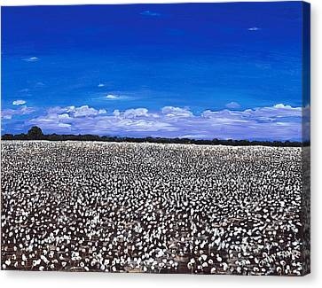 Cottonfields In Eastern Arkansas Canvas Print by Cathy France
