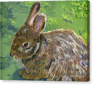 Cottontail Canvas Print by Lynne Reichhart