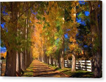 Cottonwood Canvas Print - Cottonwood Alley by Donna Kennedy
