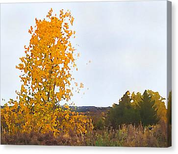 Cottonwood In Fall Canvas Print