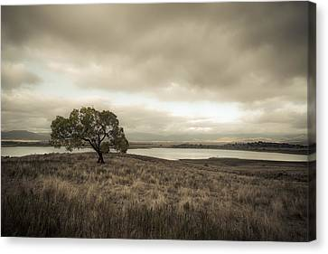 Cottonwood In October Canvas Print