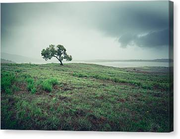 Canvas Print featuring the photograph Cottonwood In October Storm by Alexander Kunz