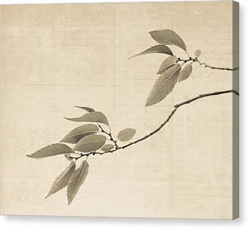 Canvas Print - Cottonwood Leaves by Sheri Van Wert
