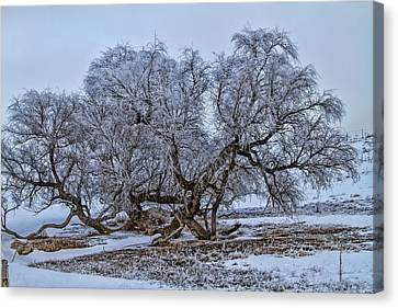 Cottonwood Sprawl Canvas Print