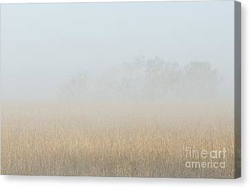 Cottonwood Trees In Fog Canvas Print by Fred Lassmann