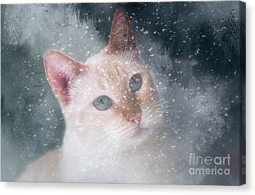 Flame Point Siamese Canvas Print - Counting Snowflakes by Elisabeth Lucas