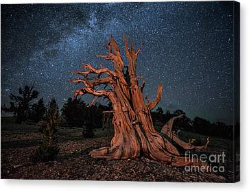 Countless Starry Nights Canvas Print by Melany Sarafis