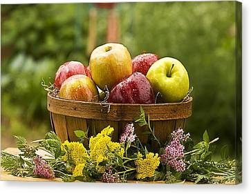 Country Basket Of Apples Canvas Print by Trudy Wilkerson