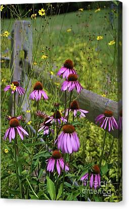Country Coneflowers Canvas Print by Dodie Ulery