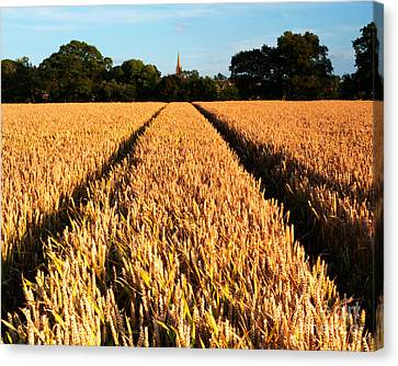 Country Evening Corn Field Canvas Print