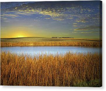 Country Field 2 Canvas Print