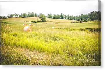 Alberi Canvas Print - Country Landscape With Haystacks And Tall Grass Trampled - Panoramic Format by Luca Lorenzelli