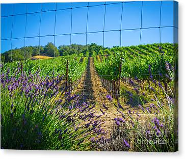 Country Lavender V Canvas Print by Shari Warren